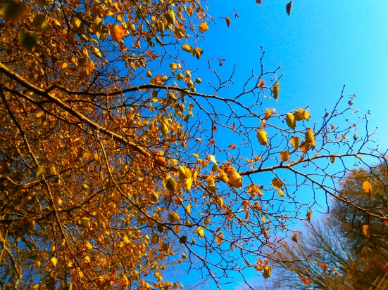 Leaves, branches and sky